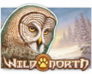 wild-north-best-slot-playn-go-300x240