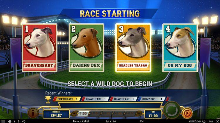 wildhound-derby-slot-review-playn-go-bonus (2)